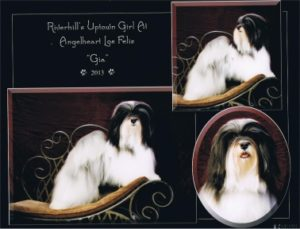 View GCH Riverhill's Uptown Girl at Angelheart
